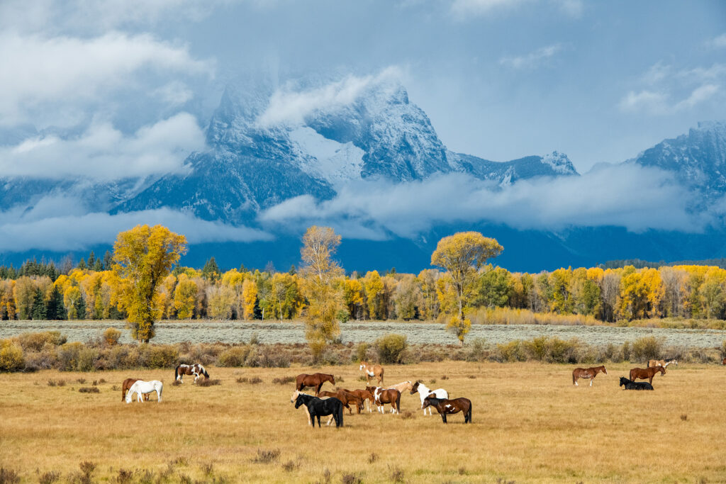 Horses pose in front of Mount Moran.